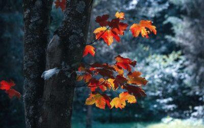 Seasonal Affective Disorder (SAD) or Life Calling You To Change?